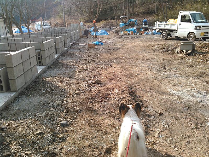 建設中の第三犬舎