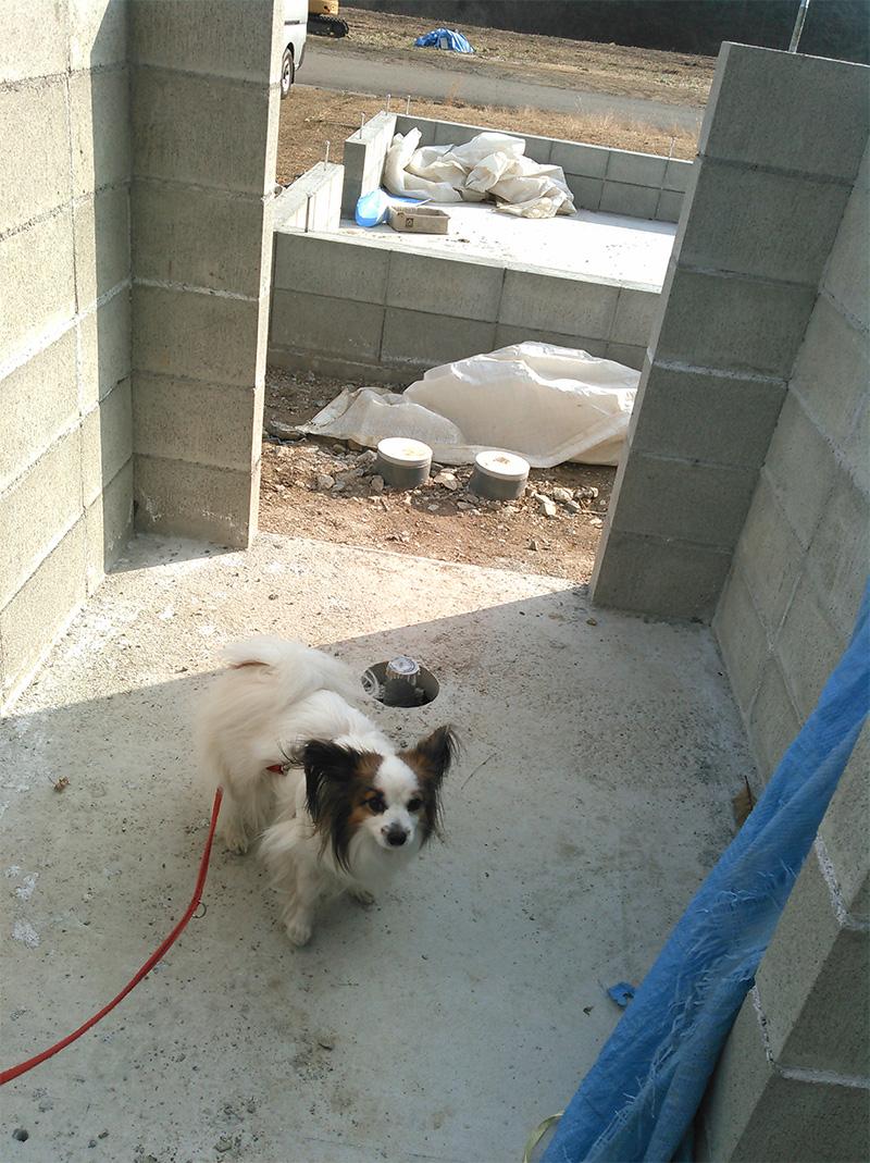 治療中のワンコが入る犬舎