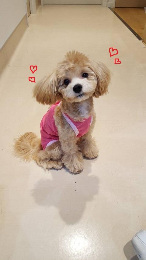 犬 の 避妊 手術 後 避妊手術後のメス犬で見られる尿失禁の原因は体重と手術のタイミング...
