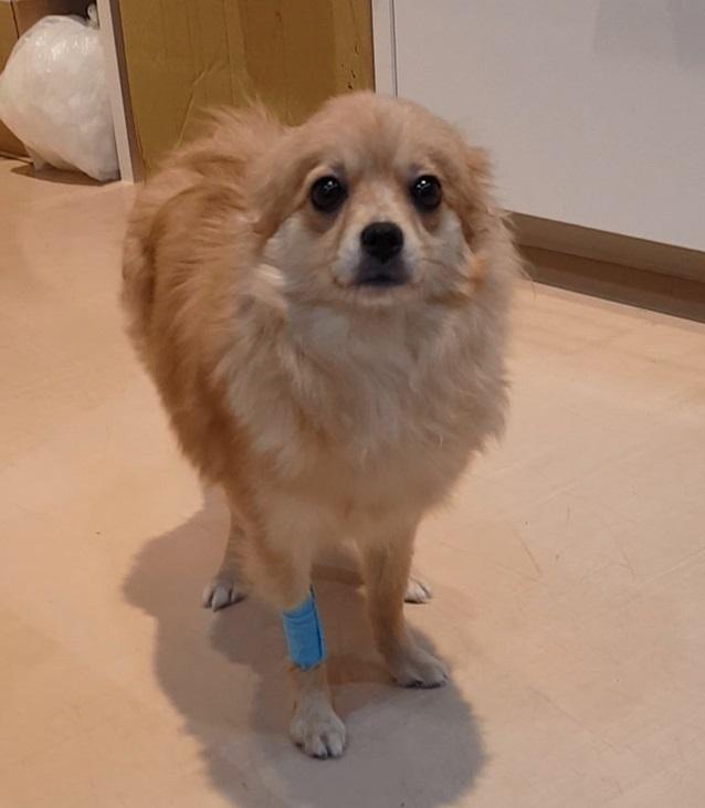 犬 避妊手術 腹腔鏡 東京
